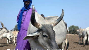 Guide on implementing and managing pastoral units in Senegal.